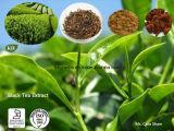 Teaflavinas del extracto del té negro el 25%, el 40%, el 60% (84650-60-2) para la salud cardiovascular y cáncer