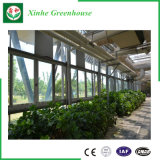 Тип используемые парники Venlo Multi пяди цветка коммерчески стеклянные