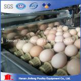 زراعيّة يغلفن بيضة يضع دجاجة أقفاص