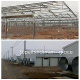 Chambre de poulet chaude de structure métallique de Gavalnized avec le matériel de ferme