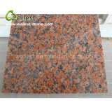 Granit rouge Polished normal de la surface G562 de la Chine pour la tuile du revêtement 600X600 de mur