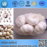 Brandnew пурпуровое Garlics с большим ценой