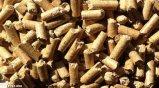 Lettiera di legno amichevole di Eco per il migliore prezzo