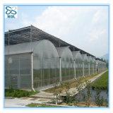 Casa verde da película agricultural automática