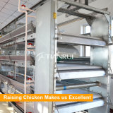 Hot Dipped Galvanized Battery Design Poultry Equipment For To bush-hammer