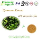 Pó do extrato de Silvestre do Gymnema com ácidos Gymnemic de 25%