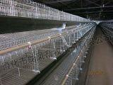Gaiola quente da galinha da venda com boa qualidade em África