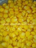 As melhores sementes de milho doce enlatadas da boa qualidade do preço