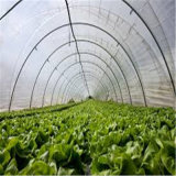 Hot Sale Vegetables / Garden / Flowers / Farm Film Green House