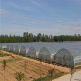 Casa verde do túnel econômico da agricultura para Growing vegetal - Helen