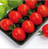 Nouveau Style Mexique Market Hot Sale Blister Thermoformed 15lb pp Tomato Packing Tray Liners avec FDA Attestation