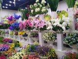 밀라노 로즈의 인공 꽃 75cm 구 D70196