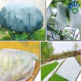 معمل ينمو حقيبة لأنّ شجرة وخضرة تغذية مع [نونووفن] بناء