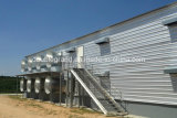 La volaille préfabriquée de structure métallique renferment/Chambres de poulet (DG6-006)
