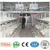 Cages dans la Chambre de volaille pour la ferme d'oiseaux de poulet à rôtir
