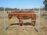 Painéis de quintais de gado 1.6m X 2.1m tubos oval