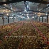 Equipamento automático da exploração avícola para a produção da grelha