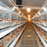 Poultry prefabbricato Farm House e Automatic Poultry Equipment