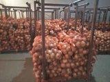 Свежее китайское пурпуровое высокое качество Wirh лука