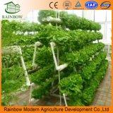 Hydroponik-System für Gewächshaus-Gemüse