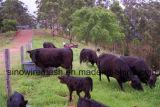 Rete metallica esagonale d'acciaio di Sailin per la rete fissa del bestiame