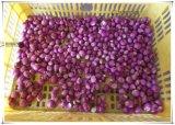 Tipo economico sbucciatrice dell'aglio, scalogno Peeler Fx-128s
