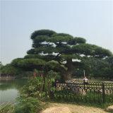 人工的な装飾的な古代松の木