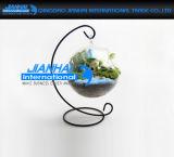 Hauptpflanzenkugel, die freien Glasvase mit Standplatz hängt