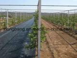 農業の黒い雑草防除の障壁