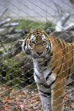 Сетка приложения/загородки/клетки тигра