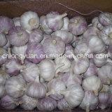 Fresh cinese Normal White Garlic con Mesh Bag
