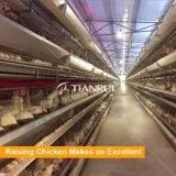 Equipamento de exploração agrícola automático da galinha da camada da alta qualidade para a venda