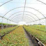 농업에서 이용되는 단 하나 온실