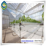 Agricoltura galvanizzata di vetro della Rosa della serra del blocco per grafici d'acciaio della serra