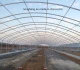 큰 크기 농업 플라스틱 온실