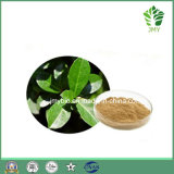 Flavoni antiossidanti naturali puri 5%, estratto del foglio del mirtillo di 10% con buona qualità