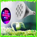 La centrale élèvent l'ampoule de l'éclairage LED E27 élèvent l'éclairage vert clair de Chambre