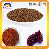El germen de la uva roja extrae el polvo Gse