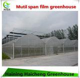 Groene Huis van de Film van Multispan het Commerciële Hydroponic voor Framboos