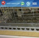 Jaulas automáticas llenas para el pollo tomatero