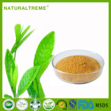 Fabrication GMP OEM ODM Green Tea Extract Powder