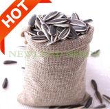 最もよい価格の卸し売り中国のヒマワリの種5009