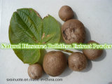 Natürliches Zubehör-Yamswurzel Bulbifera Auszug-Puder