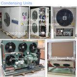 Soem sortiert modularen Kühlraum mit Nocken-Verschluss PU-Panels