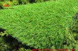 Natürlicher schauender synthetischer Gras-Garten-Rasen für Hinterhof