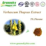 5%のフラボンが付いているVerbascumのThapsusのエキス