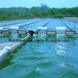 Polvo orgánico de Spirulina (alimento, grado de la alimentación)