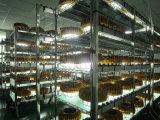 Lumière anti-déflagrante antidéflagrante de l'exploitation LED de gisement de pétrole d'Atex 50-120W