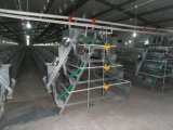 3 capacité des rangées 120 de cage complètement automatique de couche