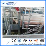 Caisses de cochonnée de cochonnée de porc galvanisées par Chambre de matériel de ferme de porc